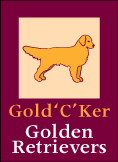 Golden Retrievers Alberta